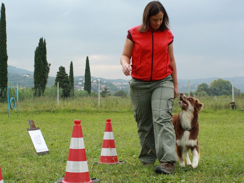 Pasji šport Rally Obedience