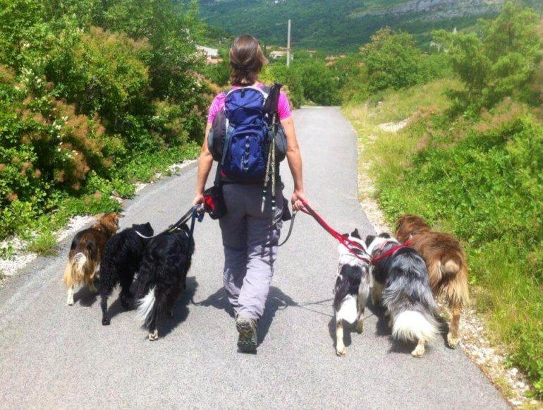 Pasja šola. Sprehod z vzgojenimi psi