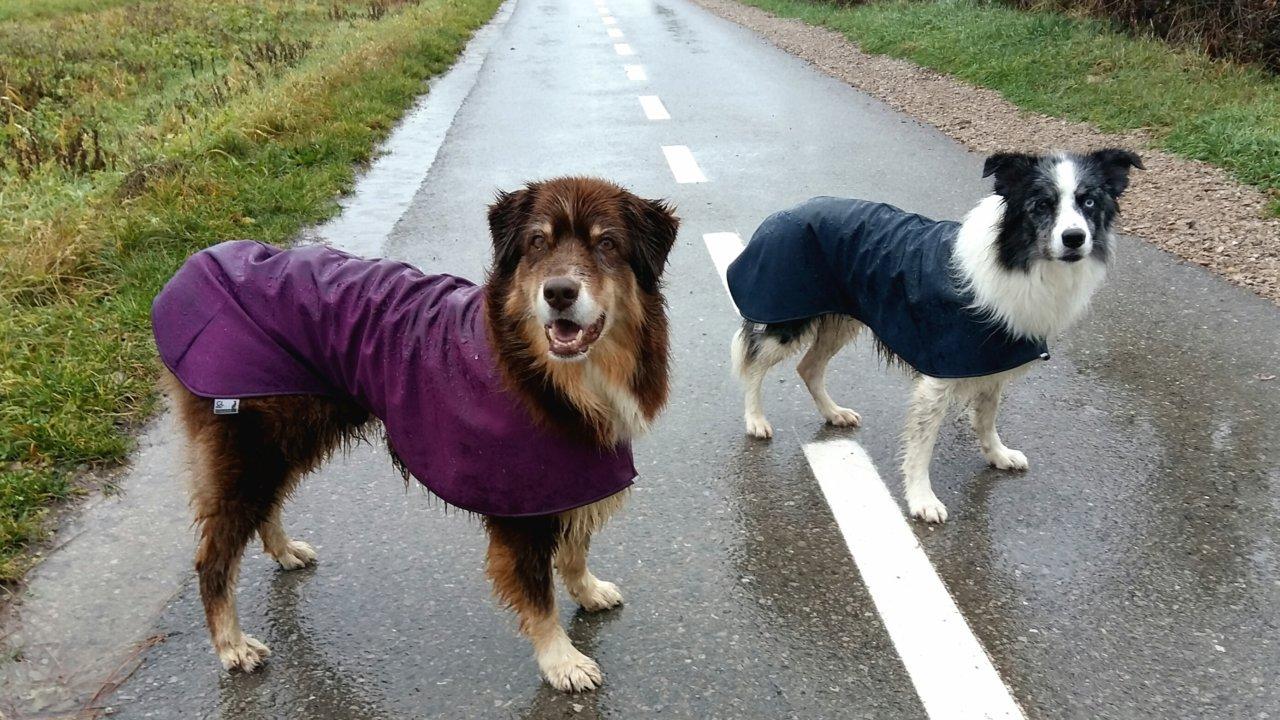 Pasja oblačila. V deževnem vremenu je dežni plašček zelo uporaben.