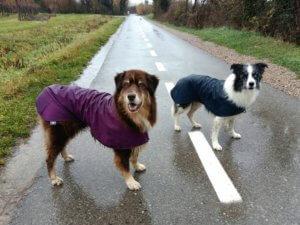 Pasja oblačila. Uporaben pripomoček ali modna muha?